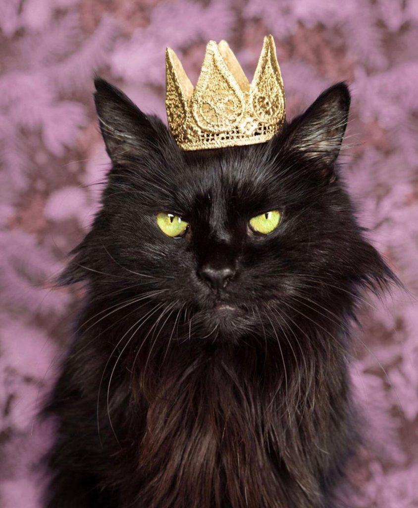 black cat wearing gold crown on head