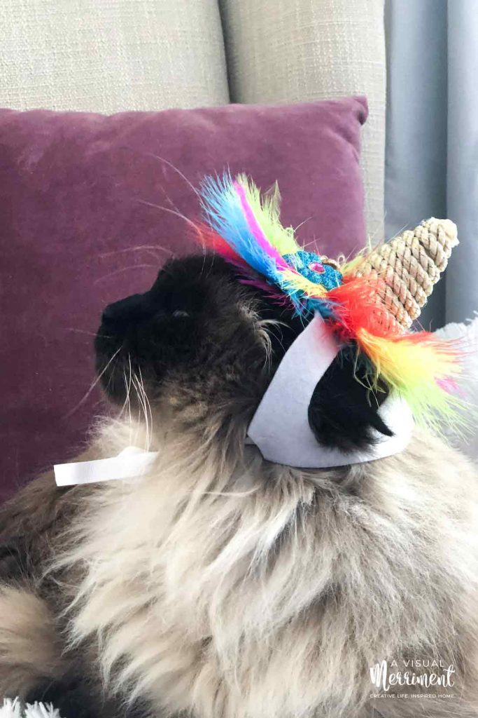cat wearing unicorn hat costume looking to sky