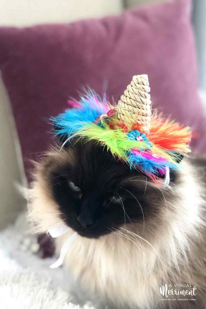 cat wearing unicorn hat looking up