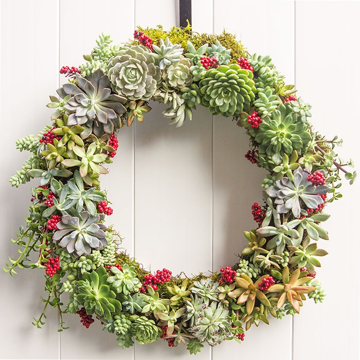 succulent wreath diy